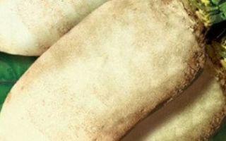 Особенности кормовой свеклы