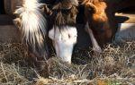Как выбрать корм для лошадей?
