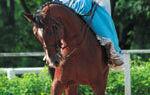 Как сделать седло для лошади?