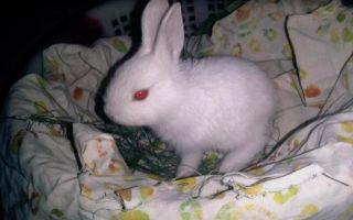 В каком возрасте происходит размножение кроликов?