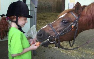 Советы о том, как ездить на лошади