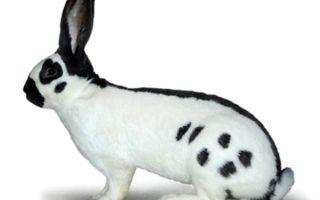 Инструкция о том, как забить кролика