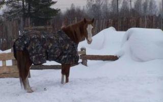 Как сделать попону для лошади?