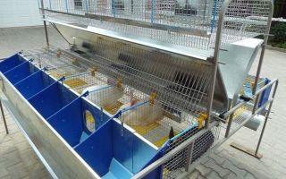 Как начать бизнес — кроличья ферма?