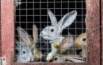 Как построить домик для кролика?