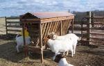 Как построить загон для овец?