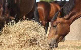 Сколько стоит андалузская лошадь?