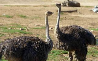 Как происходит размножение птиц?