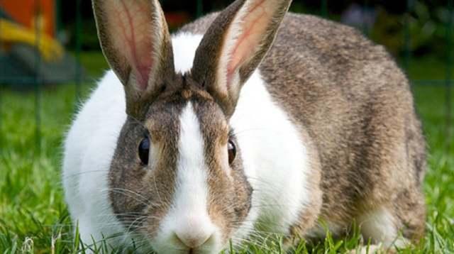 Беременность крольчих и роды - всё, что нужно знать