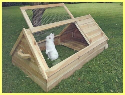 Вислоухий кролик: описание, уход и содержание в домашних условиях
