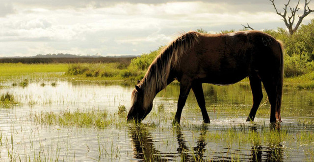 Корм для лошадей: виды, описание, суточный рацион питания лошади