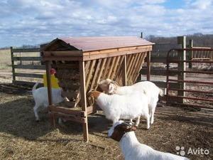 Как называется загон для овец