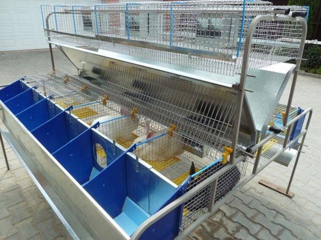 Кроличья ферма - как начать бизнес по разведению кроликов?
