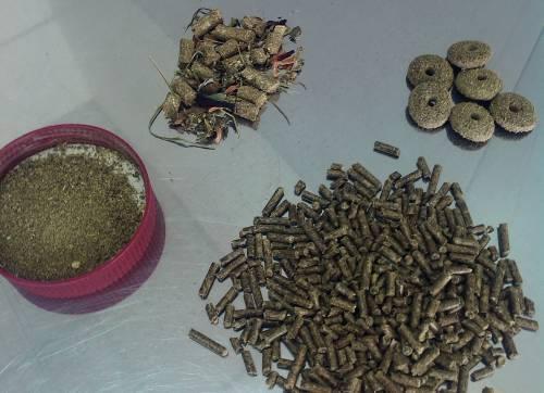 Чем кормить шиншиллу: виды кормов, составление меню