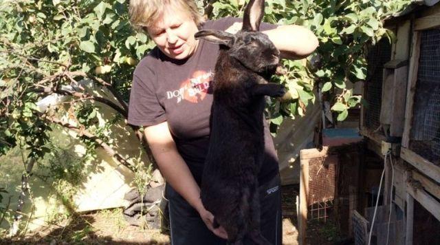 Как забить кролика - основные способы и пошаговая инструкция