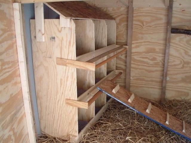 Гнезда для кур: размеры, конструкции, изготовление своими руками
