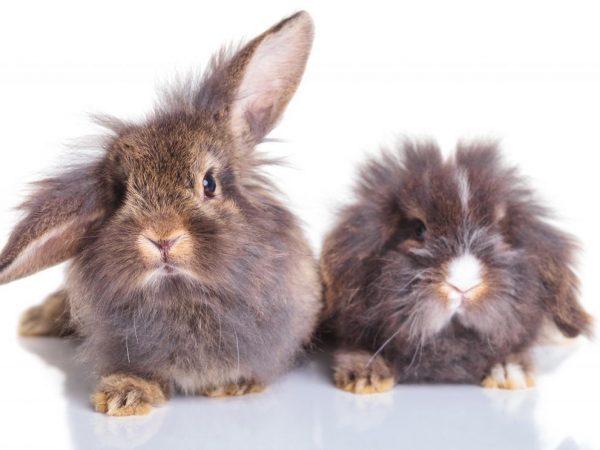Как отличить кроликов самца от самки фото: определение пола у крольчат