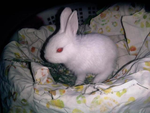 Размножение кроликов: особенности процесса спаривания