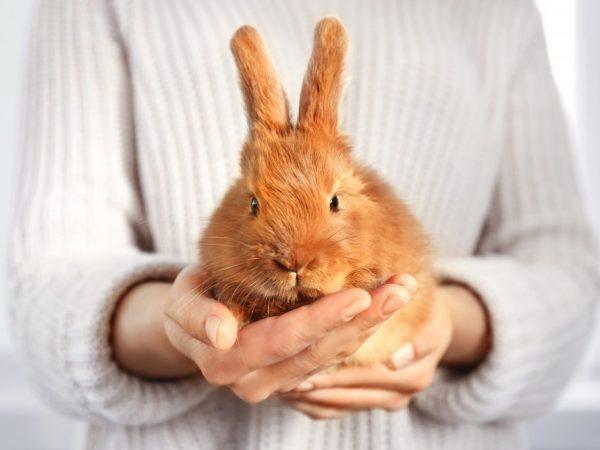 «Дитрим»: инструкция по применению для кроликов: дозировка, показания