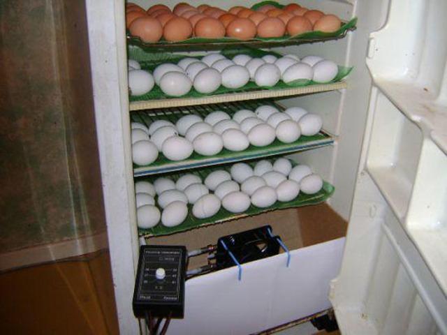 Инкубатор из холодильника: мастерим своими руками