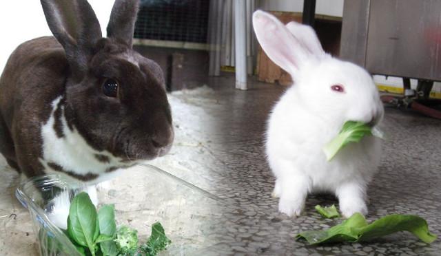 Чем кормить декоративного кролика: сколько раз и чем можно или нельзя кормить в домашних условиях и правильный уход