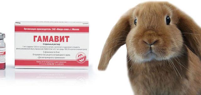 Гамавит для кроликов: как применять, дозировка и курс