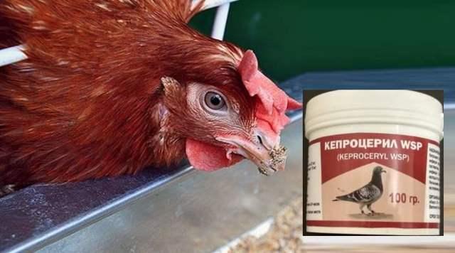 Кепроцерил для птиц: инструкция по применению