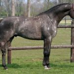 Голштинская порода лошадей: экстерьер, правила ухода, рацион