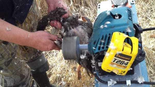 Как ощипать утку: описание горячих и сухих методов