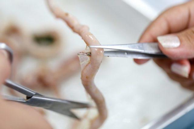 Глисты у кур: диагностика, методы лечения, профилактика