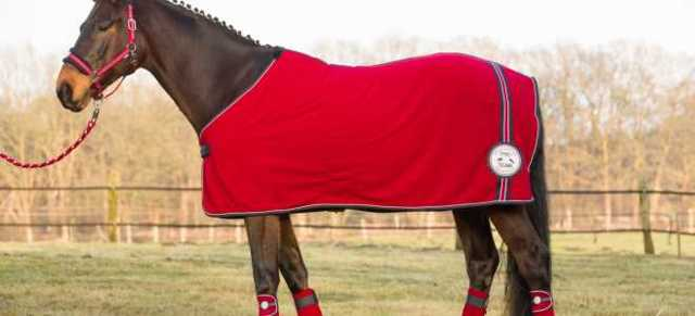 Попона для лошади: разновидности и предназначение